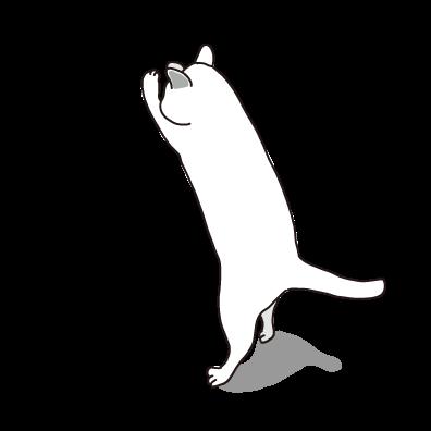 立ち上がるネコ(白)