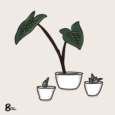 クワズイモ観葉植物3つ(ホワイト)のキャッチ画像