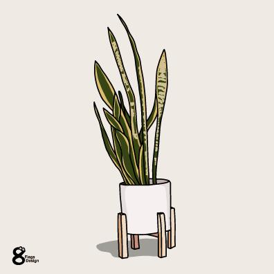 サンスベリアの鉢(白)のキャッチ画像