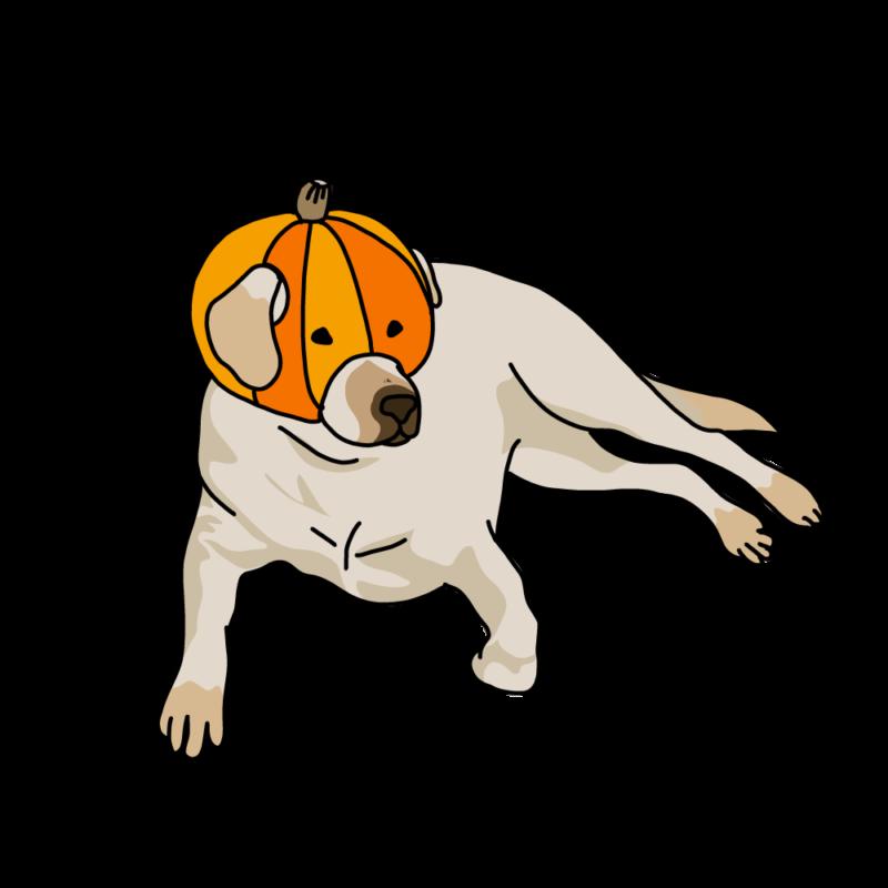 カボチャを被る犬クリーム