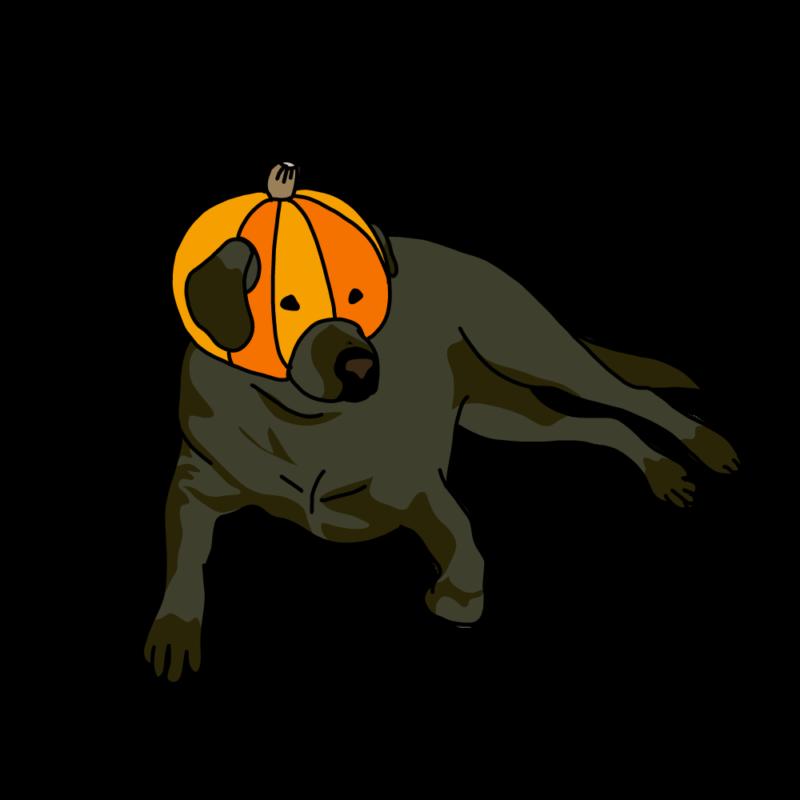 カボチャを被る犬黒