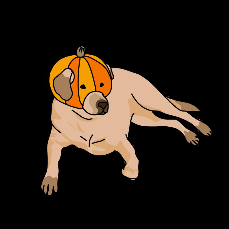 カボチャを被る犬オレンジ