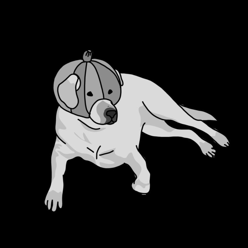 カボチャを被る犬グレー