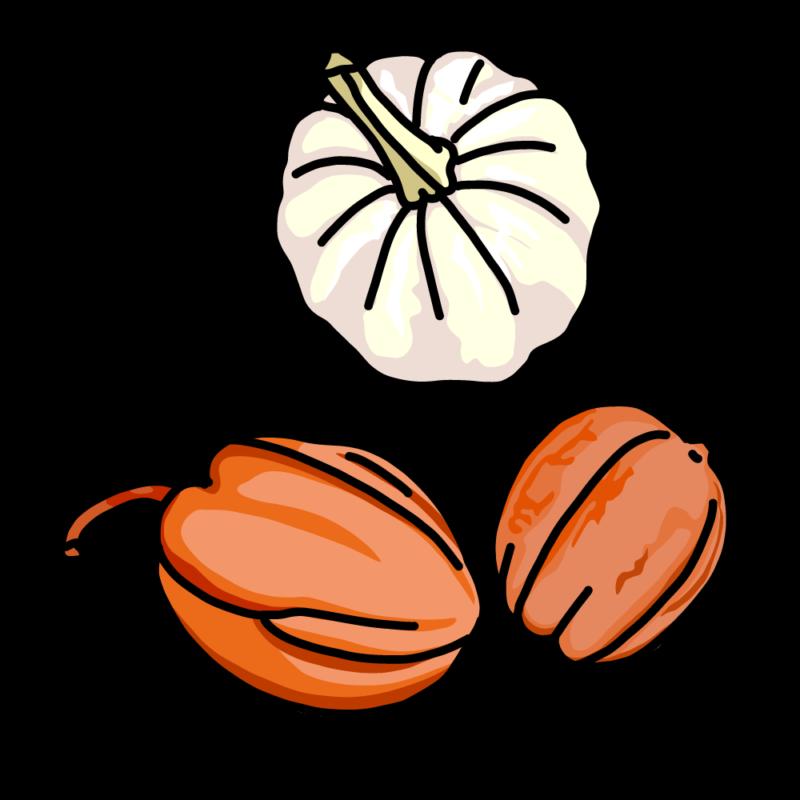 変わりカボチャ3種類ホワイト
