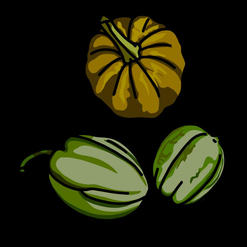 変わりカボチャ3種類グリーン