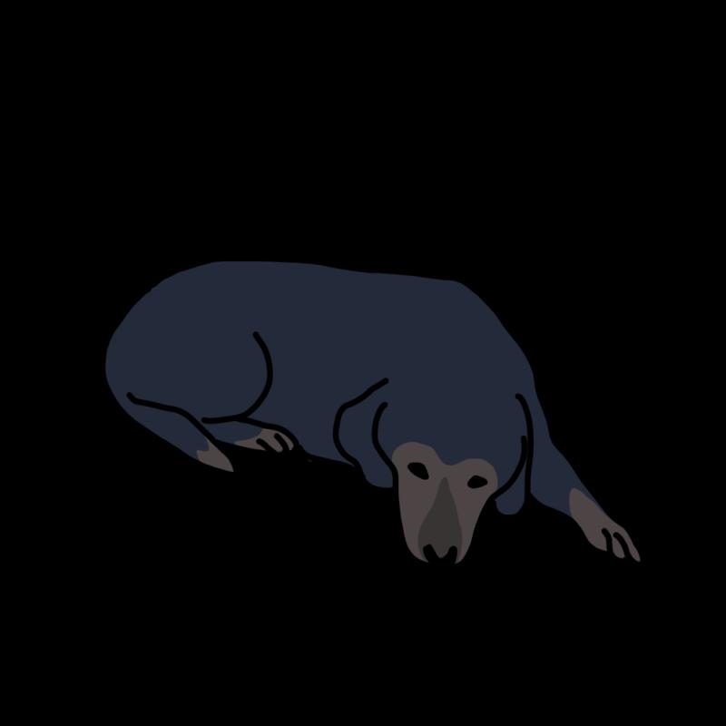 今日も、ふて寝する犬黒