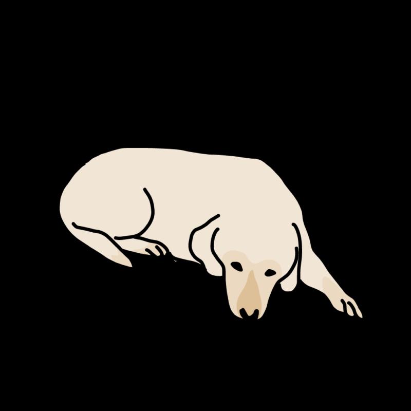 今日も、ふて寝する犬クリーム