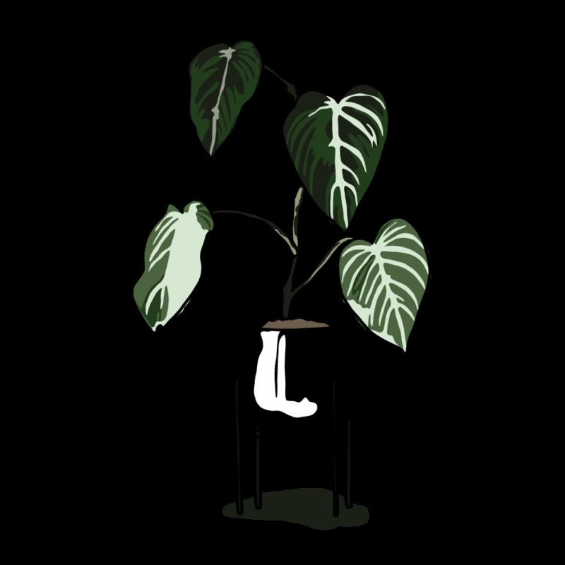 アロカシアの鉢ブラック