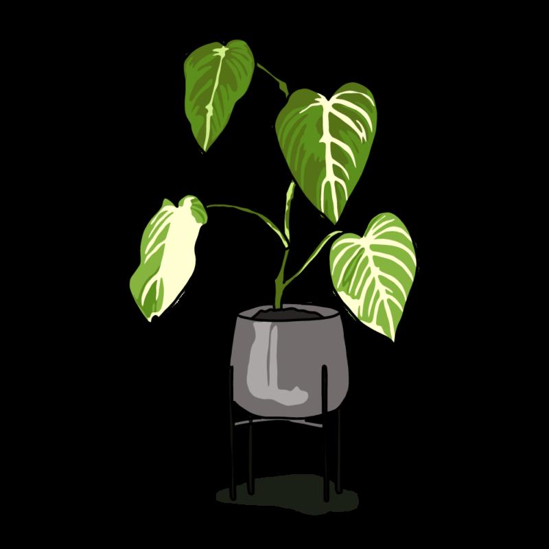 アロカシアの鉢グレー