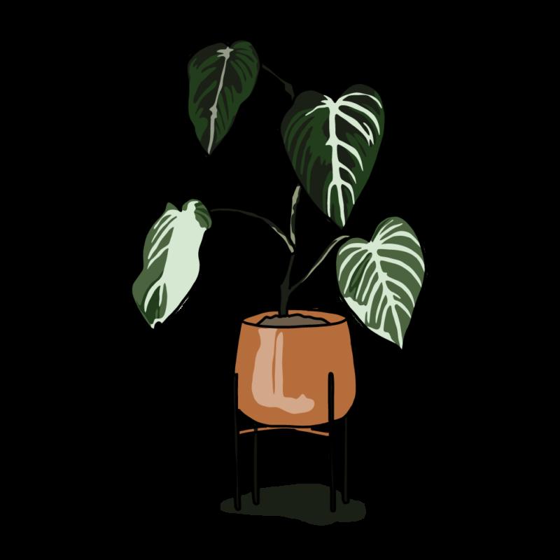 アロカシアの鉢テラコッタ
