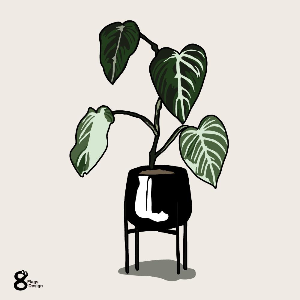 アロカシアの鉢のキャッチ画像