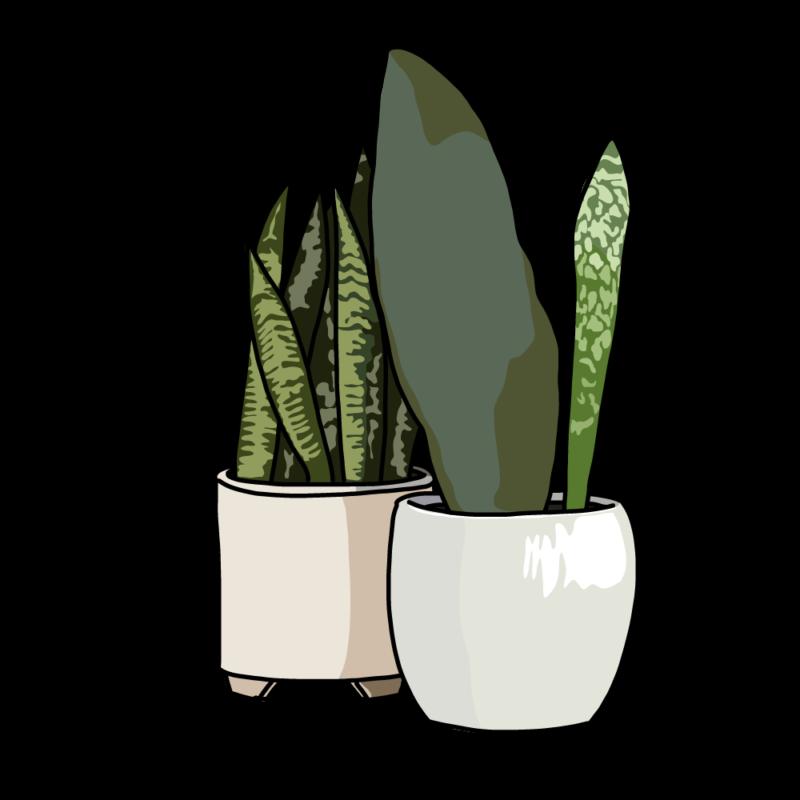 サンスベリアの鉢2個ホワイト