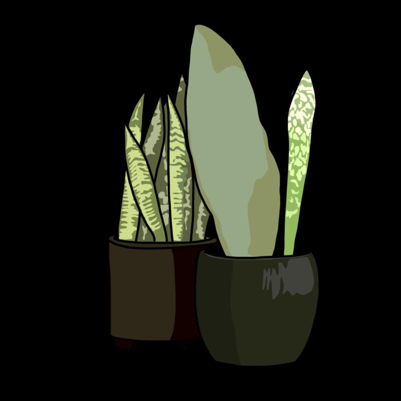 サンスベリアの鉢2個ブラック