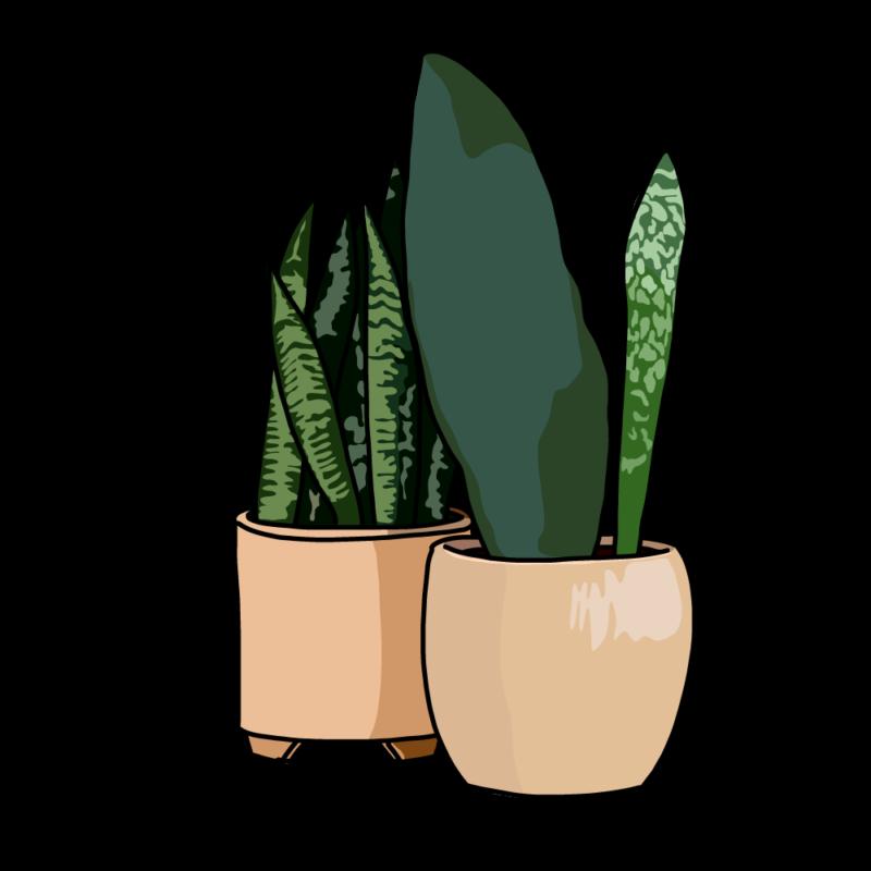 サンスベリアの鉢2個テラコッタ