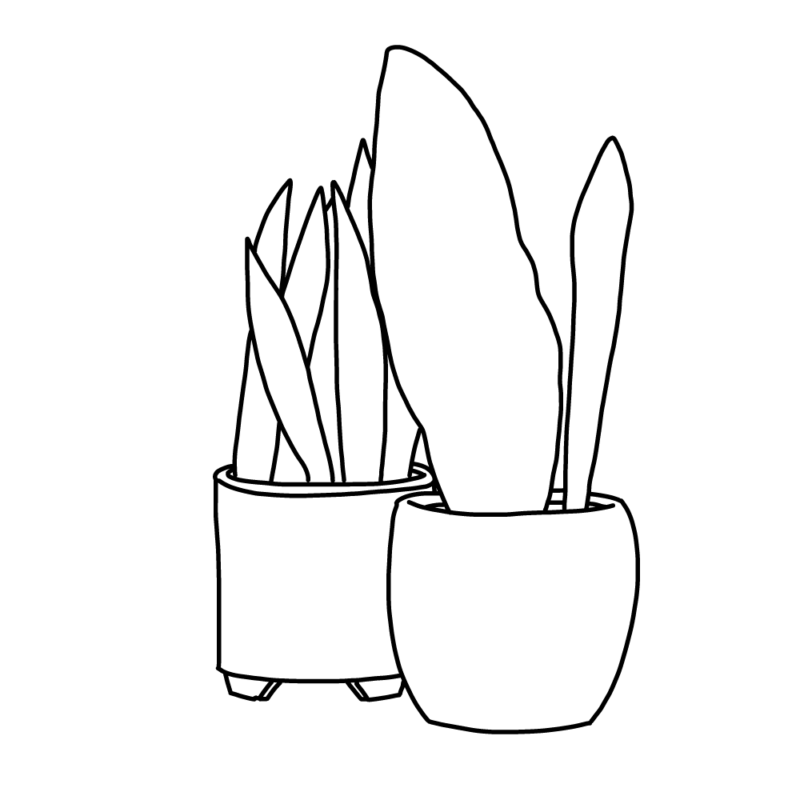 サンスベリアの鉢2個ライン