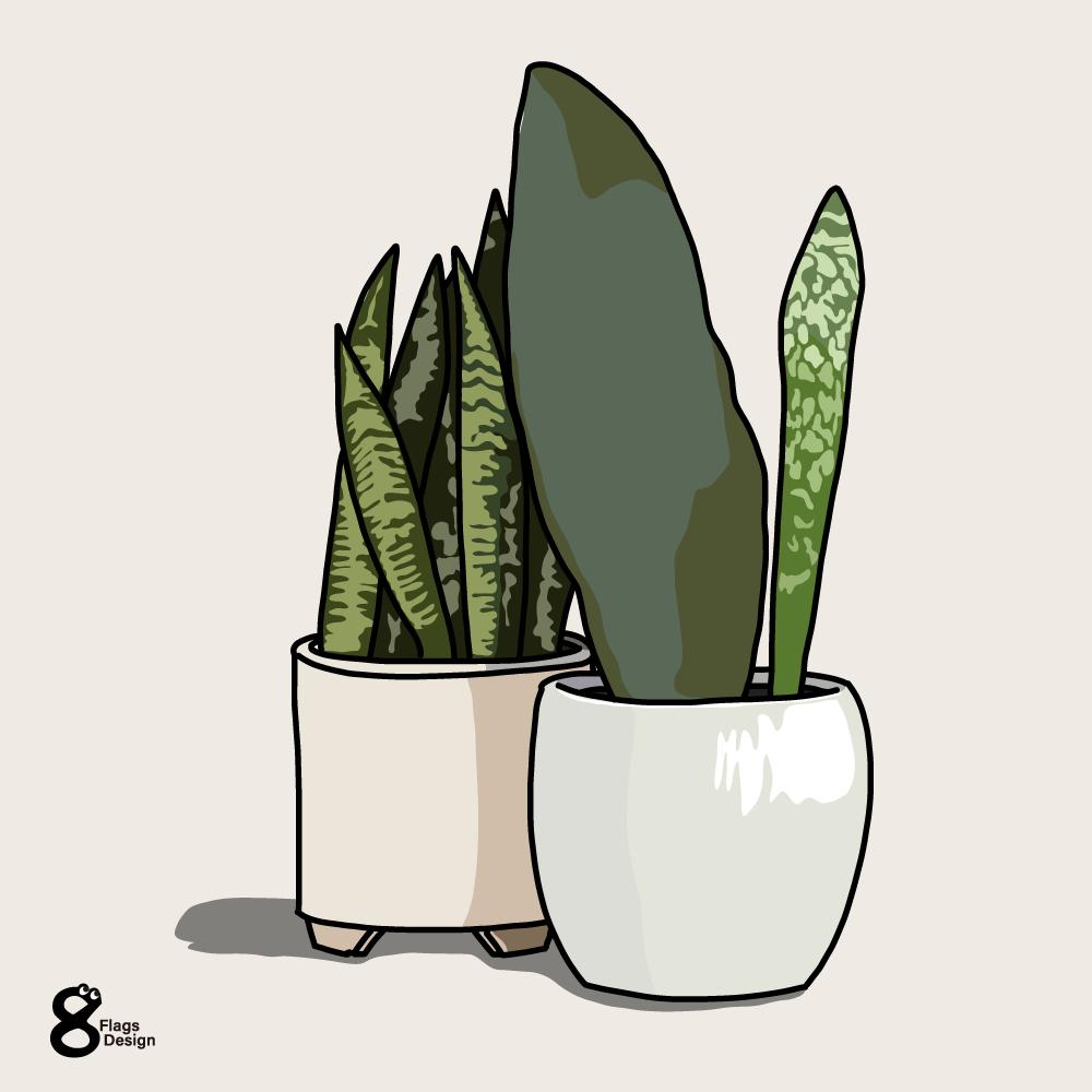 サンスベリアの鉢2個のキャッチ画像
