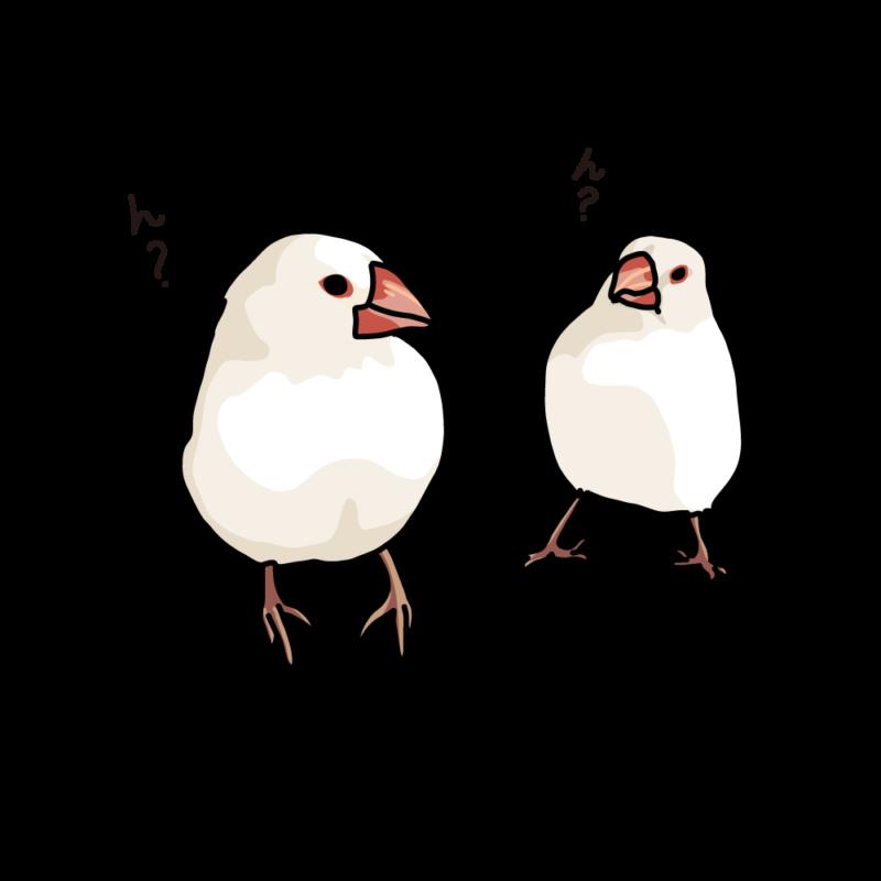 アホ毛の文鳥白