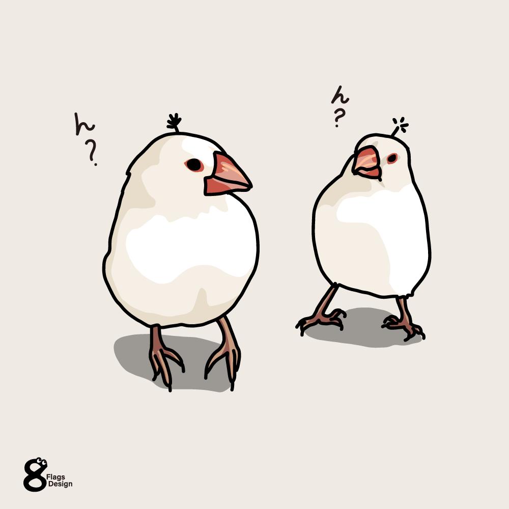 アホ毛の文鳥のキャッチ画像