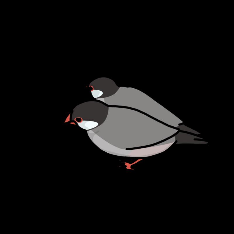 くっ付いている文鳥桜