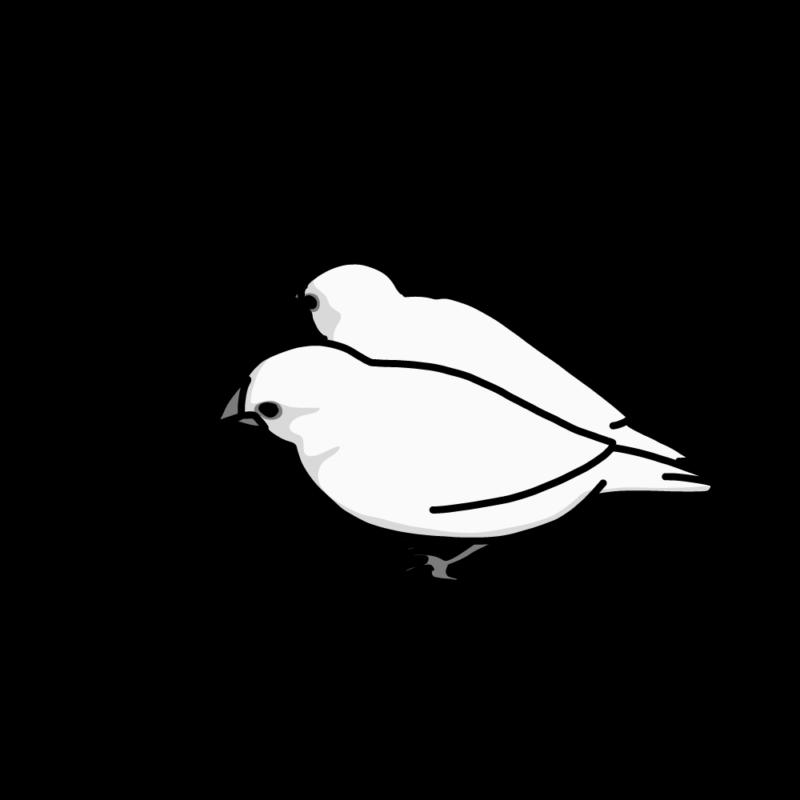 くっ付いている文鳥モノクロ