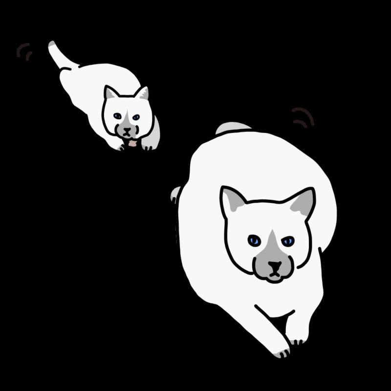 ほふく前進するネコホワイト