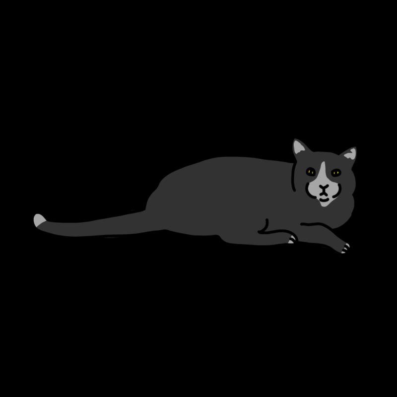 こっちを見てくるネコブラック