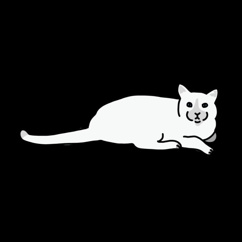 こっちを見てくるネコホワイト