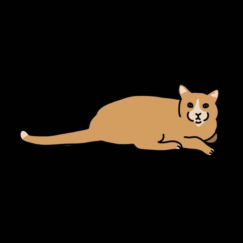 こっちを見てくるネコオレンジ