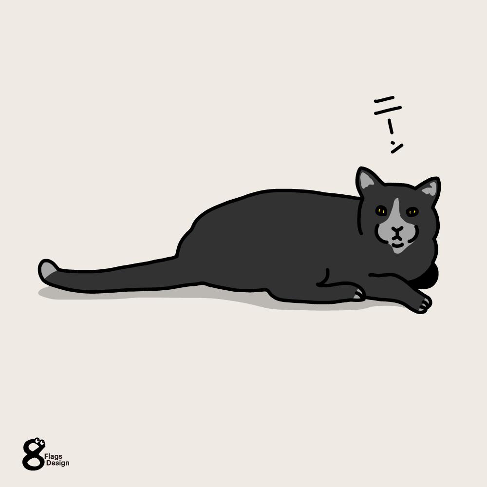 こっちを見てくるネコのキャッチ画像