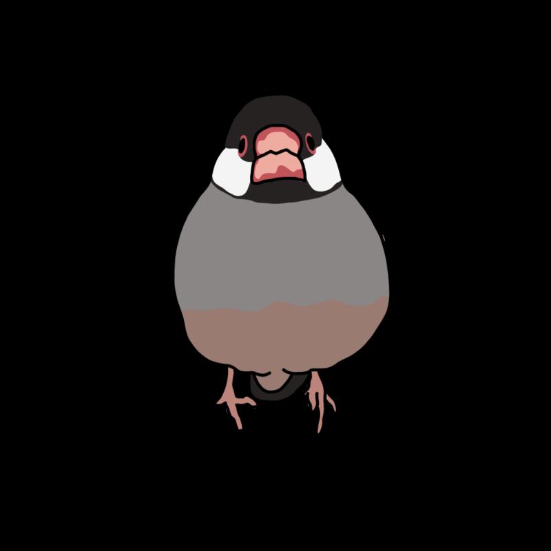 桜文鳥(無)桜