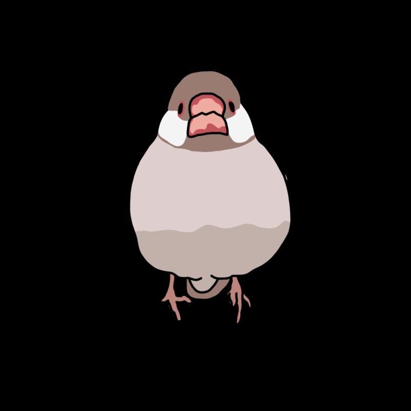 桜文鳥(無)シナモン
