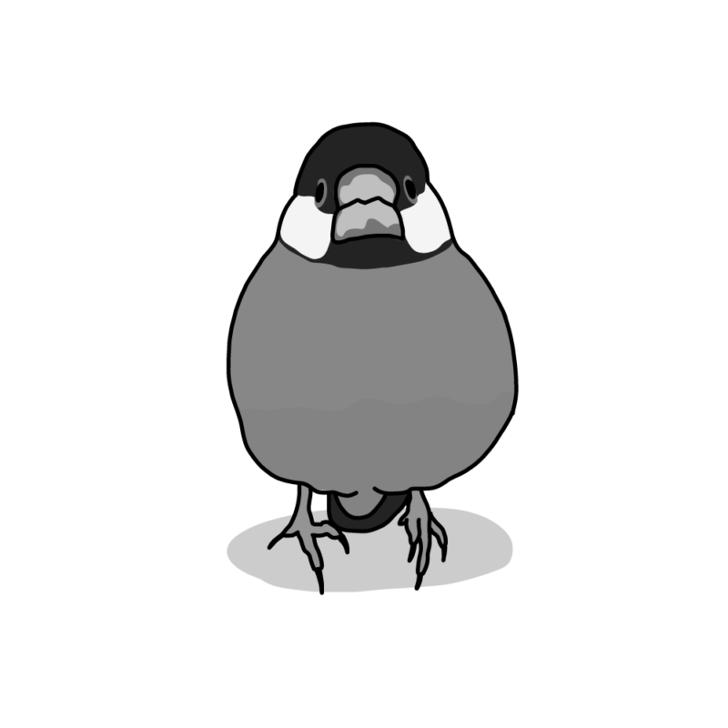 桜文鳥(無)モノクロ