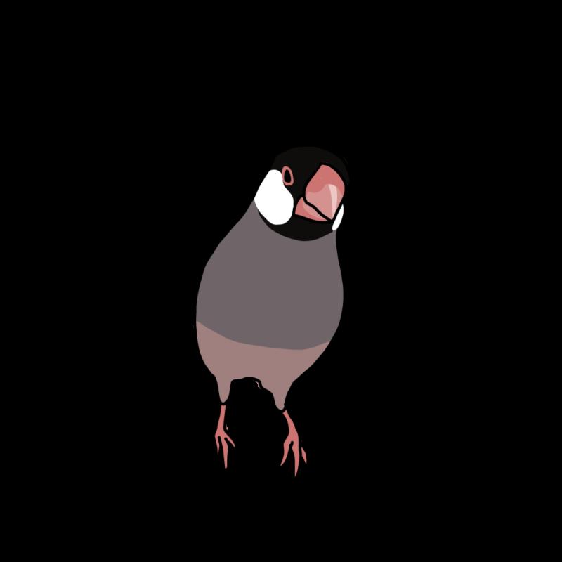 訝しげな文鳥桜