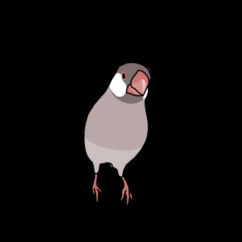 訝しげな文鳥シナモン