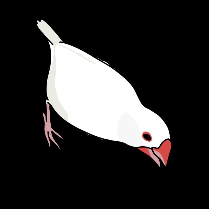 攻撃力12(文鳥さん)白