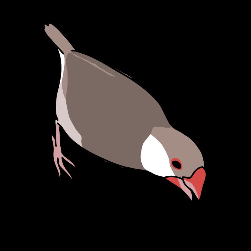 攻撃力12(文鳥さん)シナモン