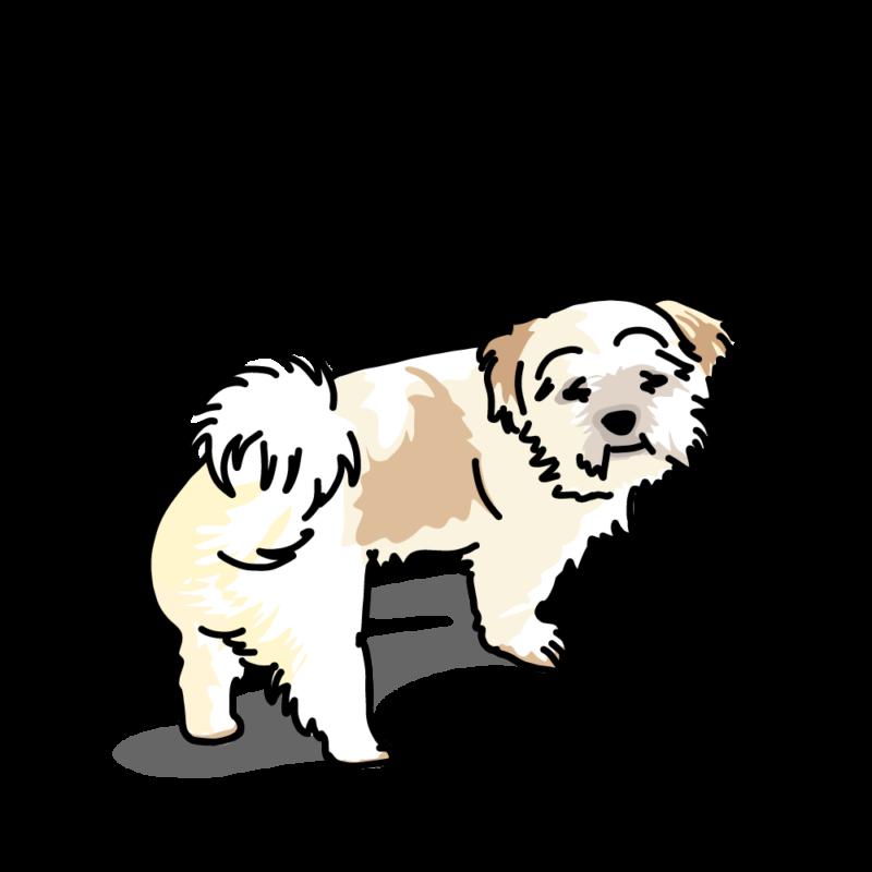 心細くなってるムク犬ホワイト