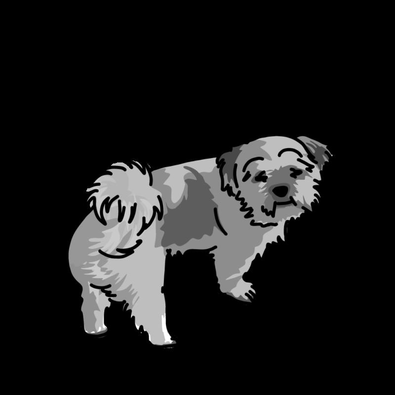 心細くなってるムク犬モノクロ