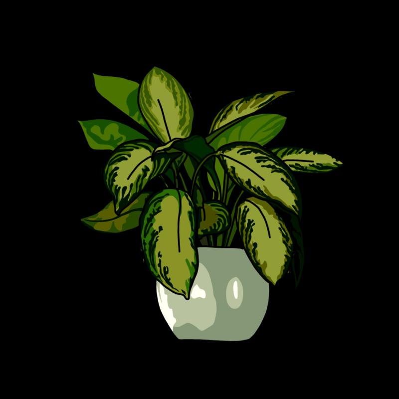 ディフェンバキアの鉢グリーン