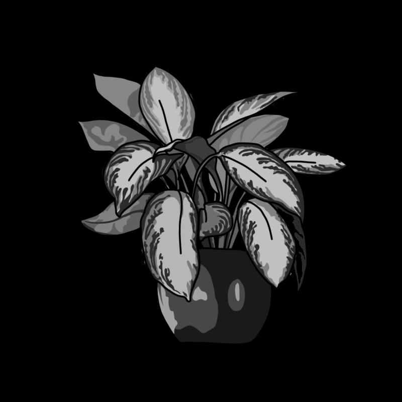 ディフェンバキアの鉢モノクロ