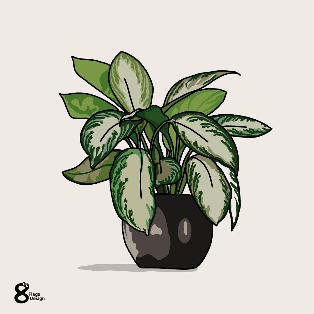 ディフェンバキアの鉢のキャッチ画像