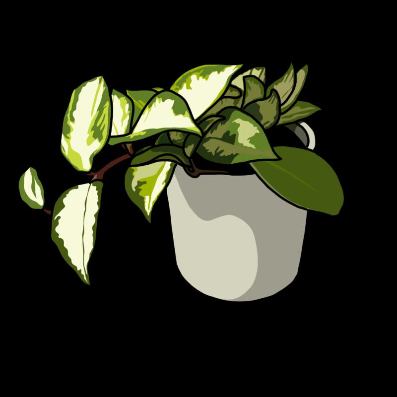 ポトスの鉢ホワイト