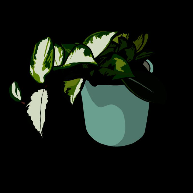 ポトスの鉢ブルー