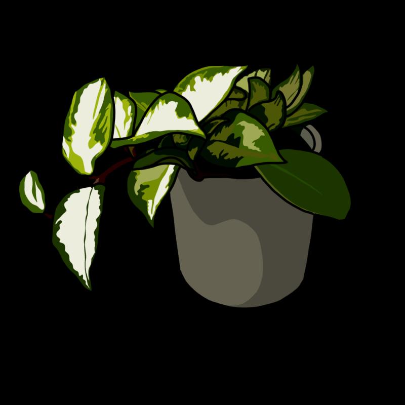 ポトスの鉢ブラウン