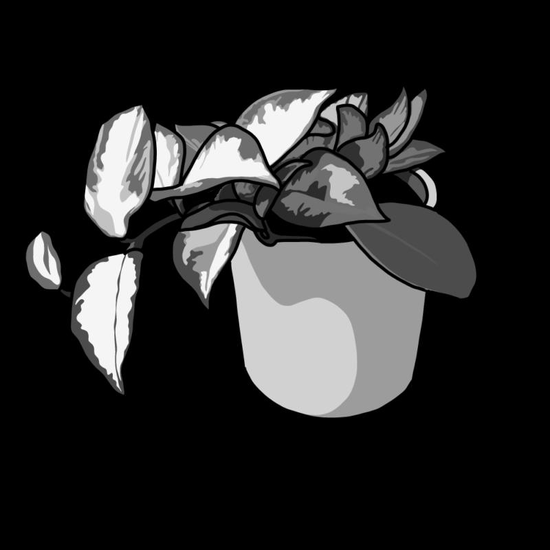 ポトスの鉢モノクロ