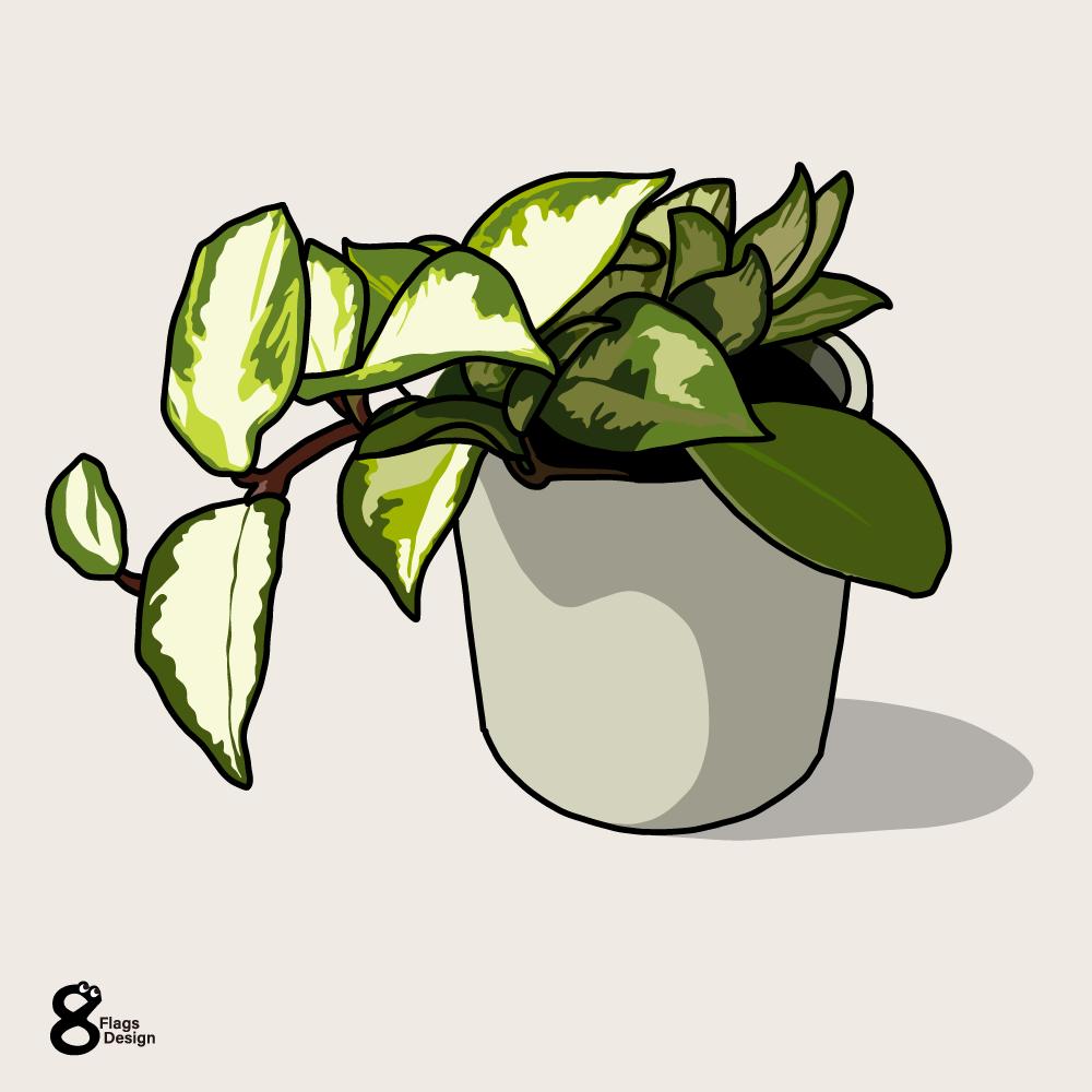 ポトスの鉢のキャッチ画像