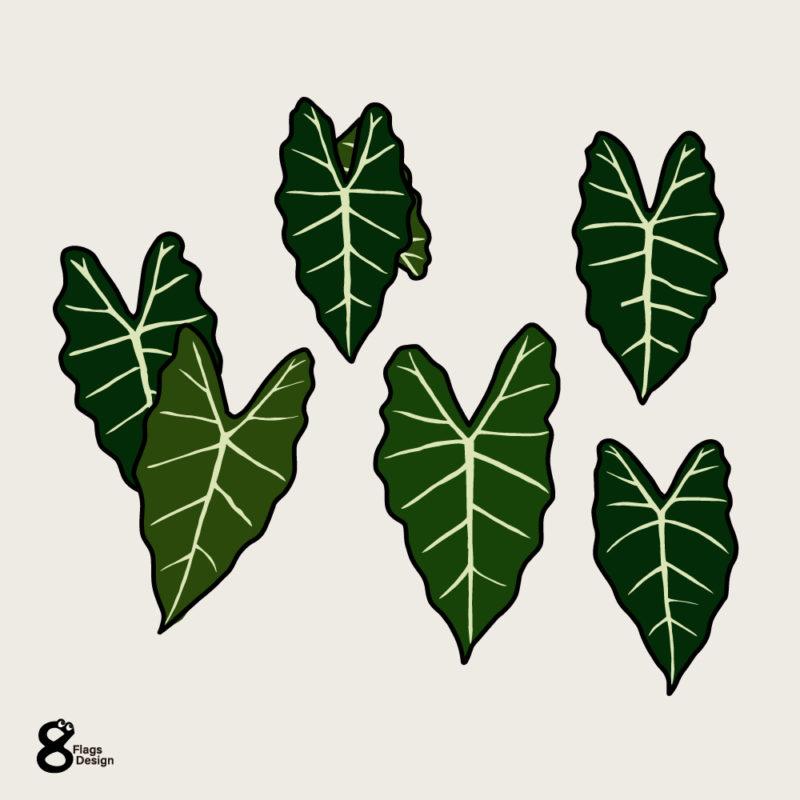アロカシアの葉っぱセットノーマル