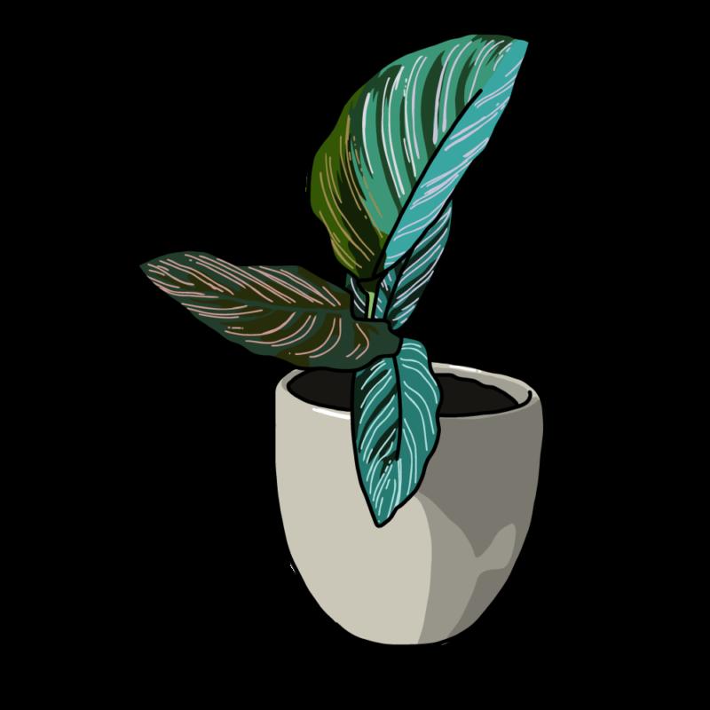 カラテアの鉢ベージュ
