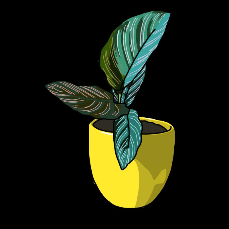カラテアの鉢イエロー