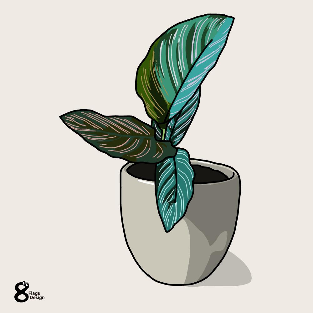 カラテアの鉢のキャッチ画像